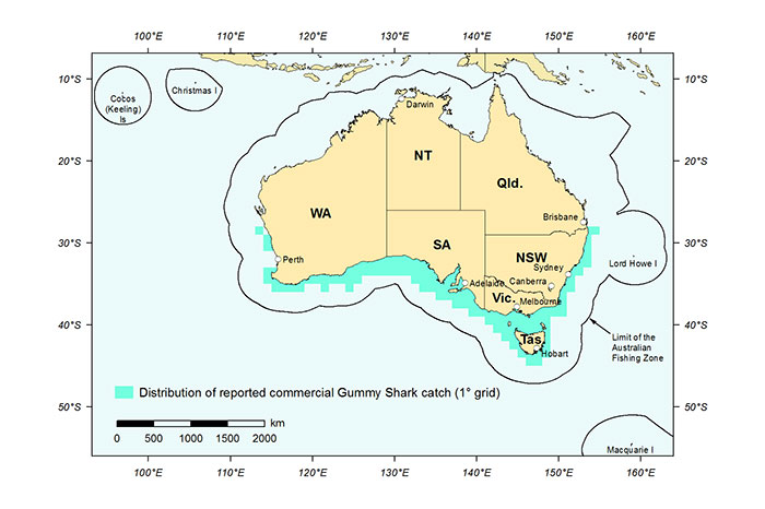 Figure 1: Distribution of reported commercial catch of Gummy Shark in Australian waters, 2013 (calendar year)